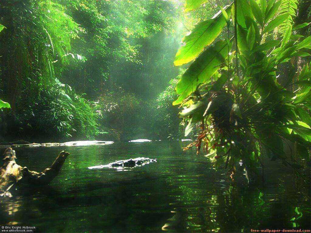 parquegospelestados-basil-amazonas-rio-3-jornalbrasileirosgratuito-1