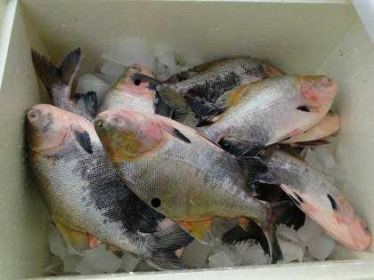 peixesenaDSC09610
