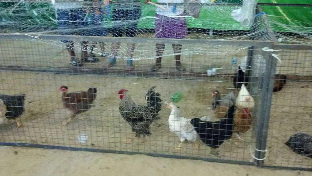 aves2012-09-21_20-28-39_706