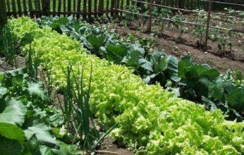 organic-gardening-346x220.jpg