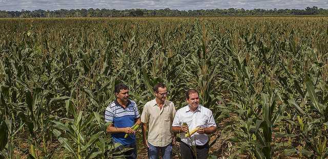 produção milho