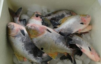 feira-do-peixe-sena-346x220.jpg