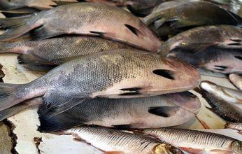 peixe-346x220.jpg