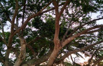 natal-sena-346x220.jpg