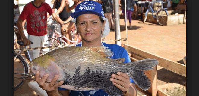 mercado do peixe em sena
