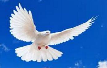 paloma-blanca-346x220.png