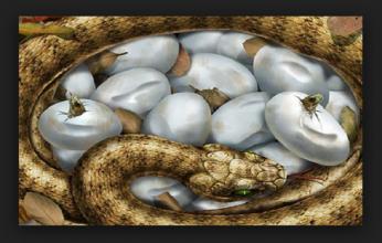 ovo-da-serpente-346x220.png