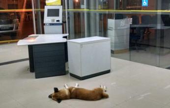 cachorro-sena-capa-346x220.png