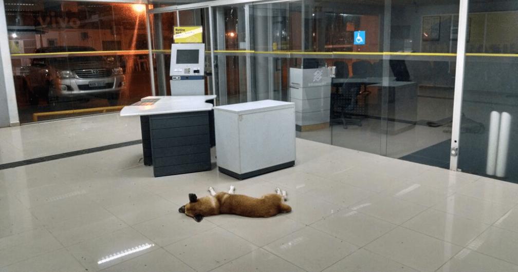 cachorro-sena