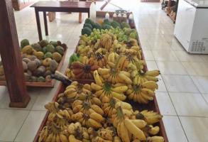 banana-acre-293x200.png