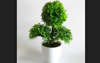 arvore-bonsai-346x220.png