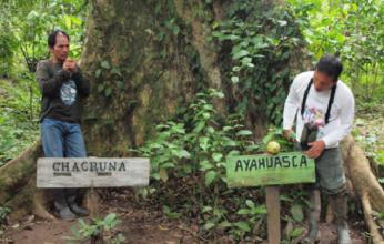 ayahuasca-capa-346x220.png