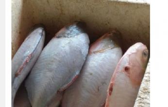 feira-do-peixe-reclamação-346x220.png