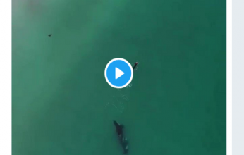 orcas-346x220.png