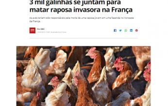 galinhas-capa-346x220.png