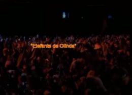 elefante-de-olinda-260x188.png