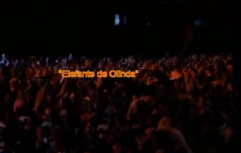 elefante-de-olinda-346x220.png