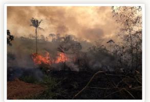 queimadas-293x200.png