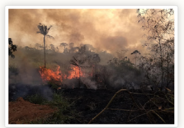 queimadas-360x250.png
