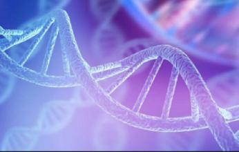 genoma-humano-346x220.png