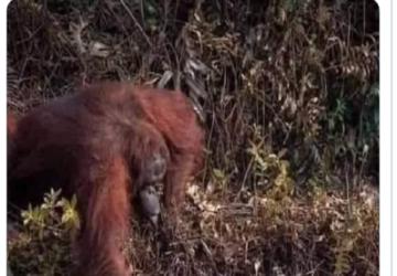 orangotango-360x250.png